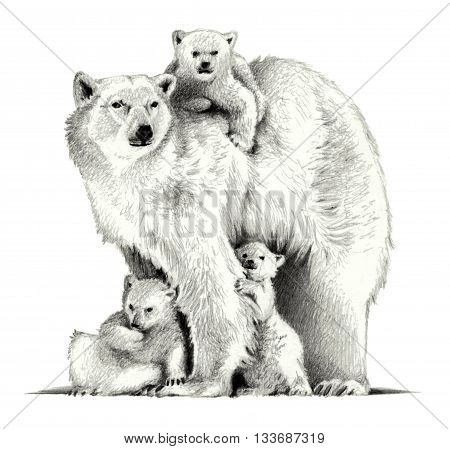 Polar bear with three cubs. pencil sketch