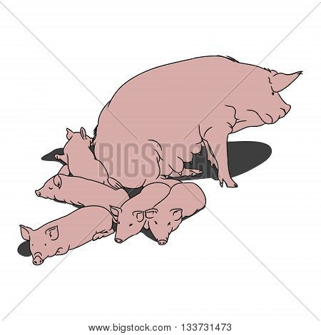a image of a pig and her piglets. The contoured silhouette pink pigs on a white background. Vector illustration
