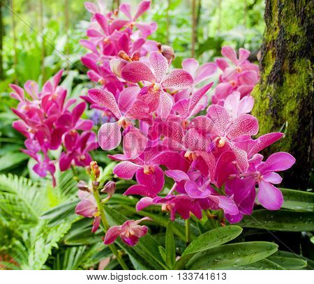 Orchid. Red orchid. Orchid is queen of flowers. Orchid in tropical garden. Orchid in nature. Orchid, orchid, orchid, orchid.