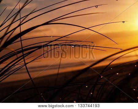 Early morning golden glow at papamoa beach Mount Maunganui New Zealand