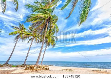 Beachside coconut with high palm trees leaning towards sea, distance cloudy sky beautiful, all create idyllic beauty, tranquility, peace as weekend resort here