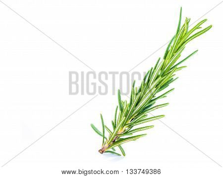 Herbal Spice Leaves Name: Rosemary (rosmarinus Officinalis), Isolated