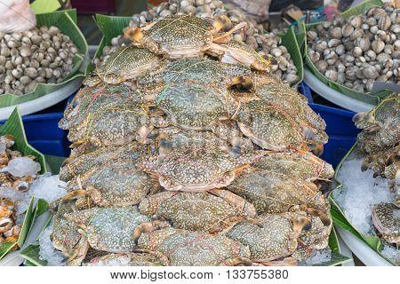 Blue Crab Fresh
