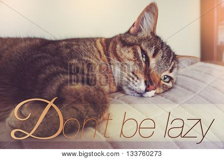 Lazy cat on the couch with text Don't be lazy