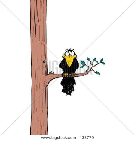 Crow 05
