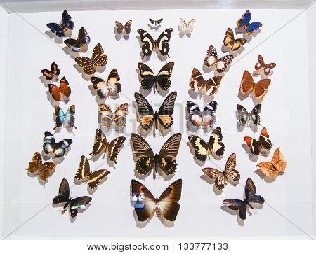 Pyatigorsk, Russia - 1 March, Butterflies of different colors, 1 March, 2016. Resort zone Mineral Waters, Krasnodar region. Pyatigorsk Entomological Museum.