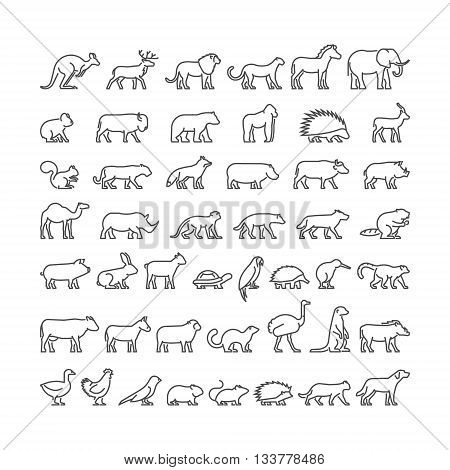 Vector linear set of silhouettes of domestic farm forest and wild animals. Line icon hedgehog cat dog cow ferret lion panther and others.
