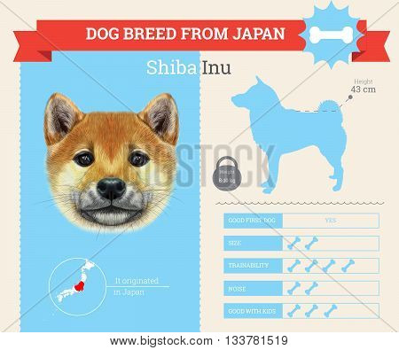 Shiba Inu Dog breed vector infographics. This dog breed from Japan