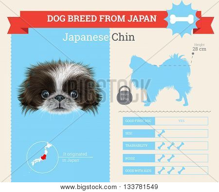 Japanese Chin Dog breed vector infographics. This dog breed from Japan