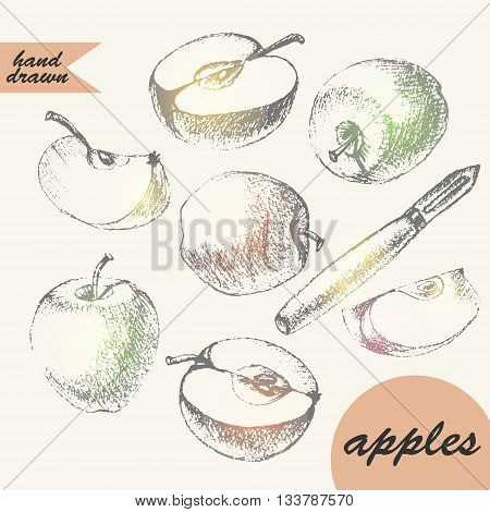 Hand drawn pencil sketch of apples and slice apple peeler apple half with shiny spots