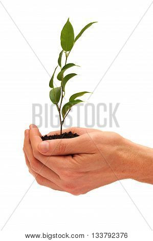 Tree in hands isolated on white background