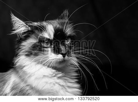 Close-up portrait in profile of spotted cat on a dark background.