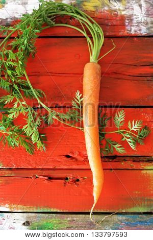 Photo of one fresh carrot on wooden background