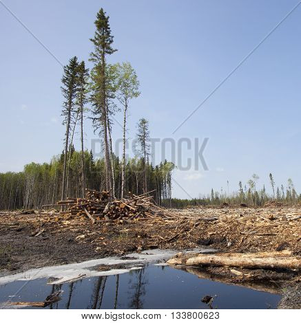 Puddle in a forest clear cut in Saskatchewan Canada
