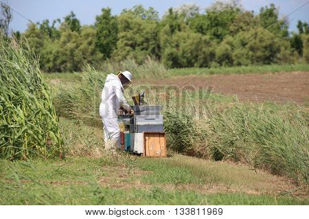 beekeeper with protective suit harvesting honey and many hives with bees in the field