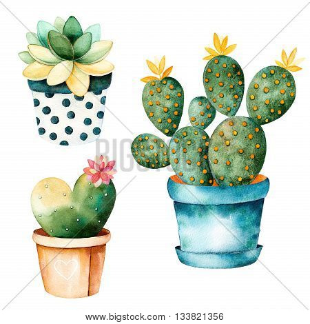 Watercolor handpainted cactus plant and succulent plant in pot.