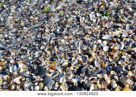 Sea Shells Sand Beach Tiny Shells In The Waves 5