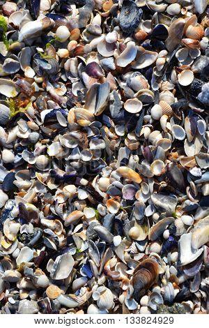 Shells Sand Beach Seacoast Summertime 2