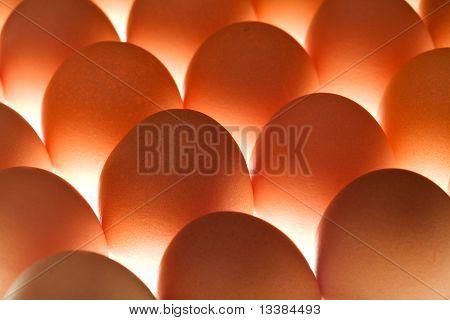 Eggs - Underlit