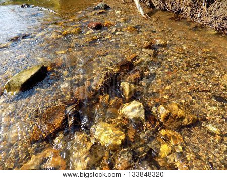 Creek in wild nature during sunny day