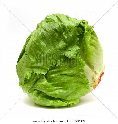 Iceberg green lettuce isolated on white background