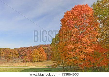 Colorful Landscape in the Fall in Morton Arboretum in Lisle Illinois