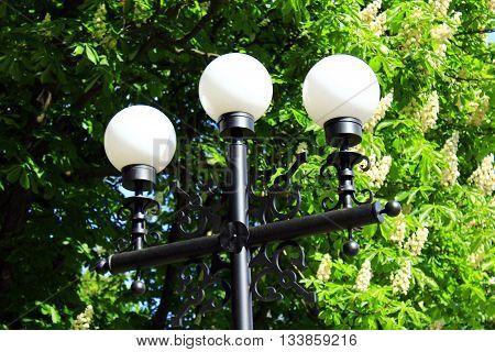 white plafonds of lanterns in city park