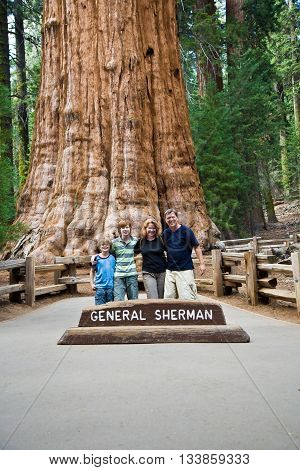 Family Is Posing In Sequoia National Park With Old Huge Sequoia Trees