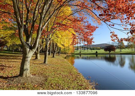 Colorful Autumn Landscape of Lake in Park
