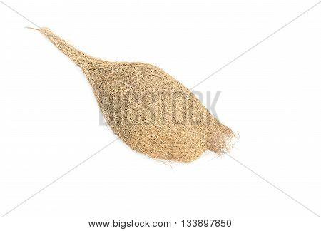 bird nest Baya weaver, skylark nests on white background.( select focus front bird nest)