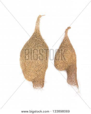 bird nest Baya weaver, skylark nests on white background.(select focus front skylark nests )