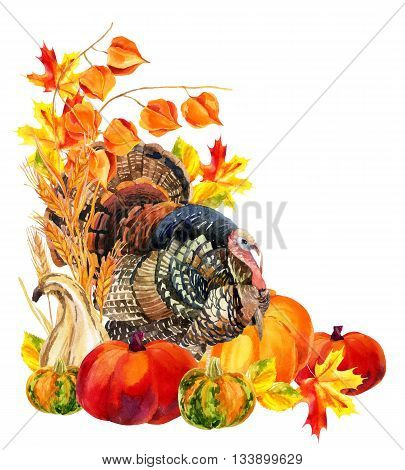 Turkey bird with harvest. Thanksgiving card. Watercolor hand painted illustration