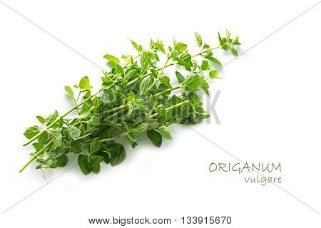 fresh green oregano Origanum vulgare isolated with small shadow on a white background with sample text