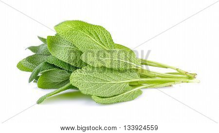 Sage plant  isolated on a white background