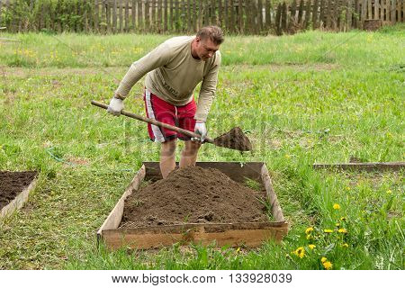 Middle aged man digging up a garden-bed to garden plants on a countryside. Man with a shovel in summer cottage garden
