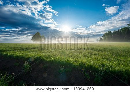 Sunrise in the Black Forest on a meadow in light ground fog.
