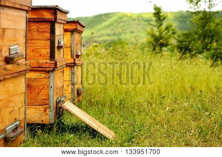 Hives of bees in the apiary Apiculture