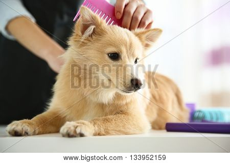 Cute dog at groomer salon