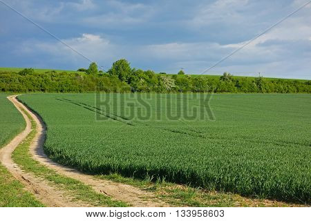 green field and macadam road next to a field and blue sky
