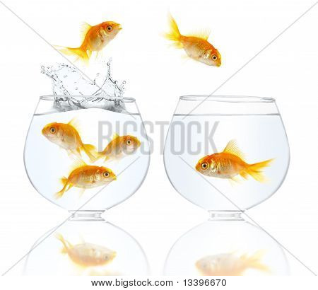 Gold Small Fishes
