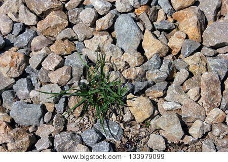 wild green grass grows through grey color of the crushed granite and limestone coarse gravel foreground closeup
