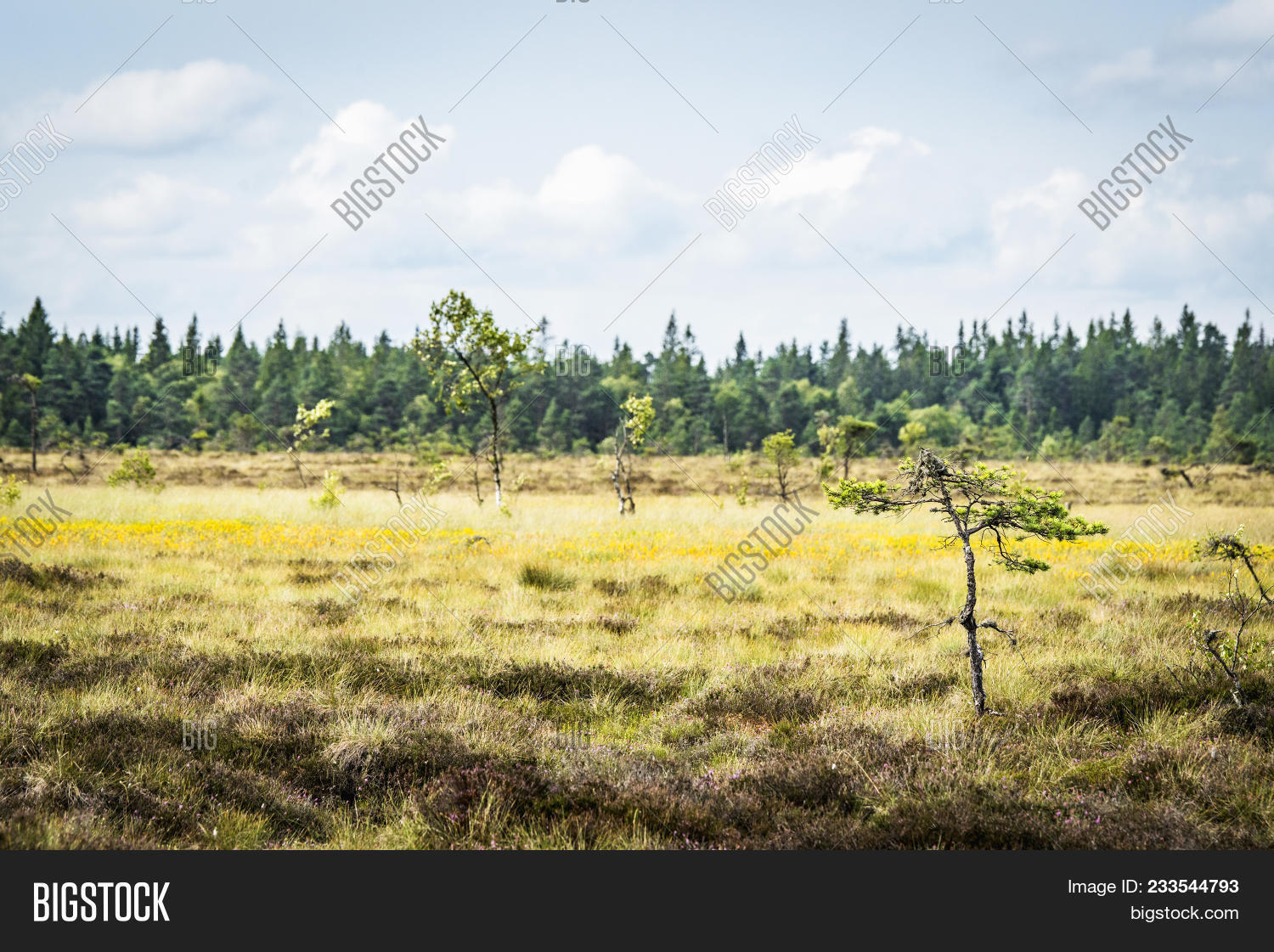 Small Pine Trees On Image Photo Free Trial Bigstock