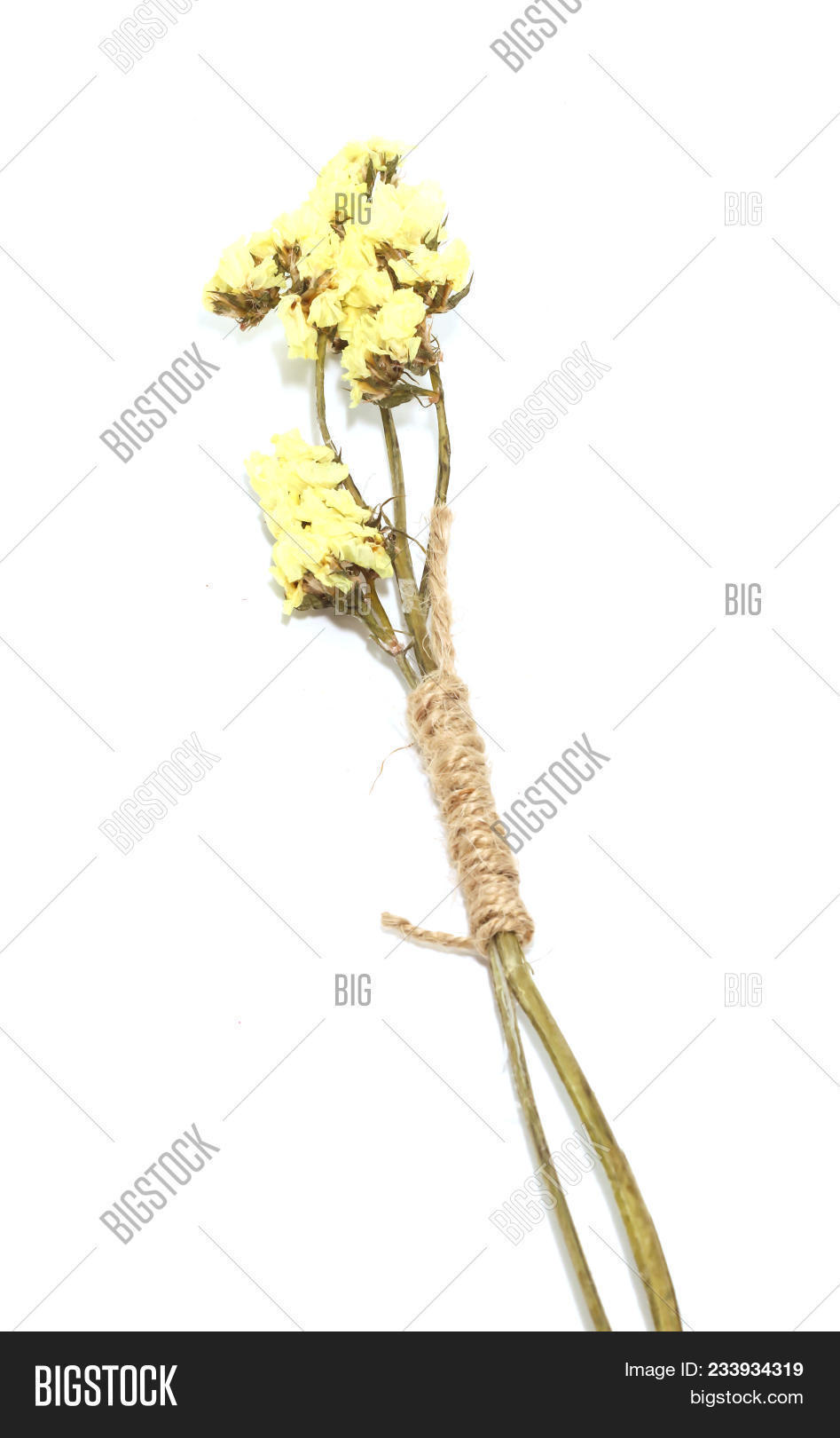 Single yellow statice image photo free trial bigstock single yellow statice flower background use for decoration on white background mightylinksfo
