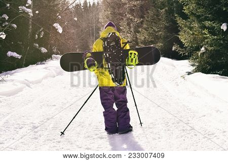 Back View Of Walking Man With Snowboard And Snowshoes Going On Backcountry Tour