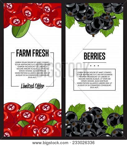 Organic Farm Flyer With Cranberry And Black Currant Vector Illustration. Natural Fruit Poster, Organ