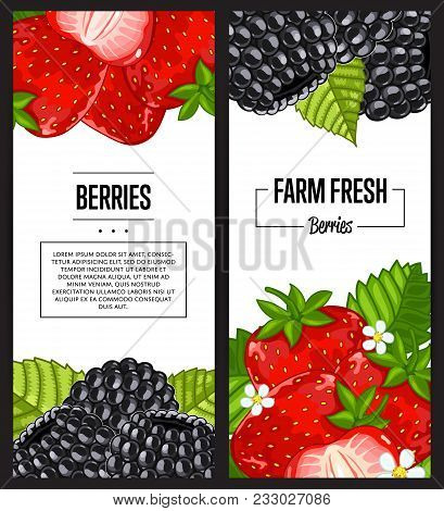 Organic Farm Flyer With Strawberry And Blackberry Vector Illustration. Natural Juicy Fruit Poster, O