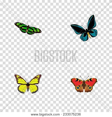 Set Of Moth Realistic Symbols With Lexias, Precis Almana, Birdwing And Other Icons For Your Web Mobi