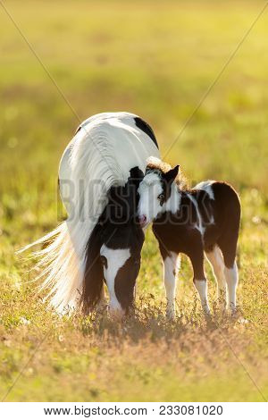 Beautiful Pony Mare With Long Mane With Beautiful Colt