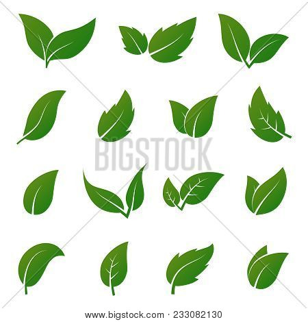 Green Leaf Vector Icons. Spring Leaves Ecology Symbols. Green Leaf And Spring Nature Organic Illustr