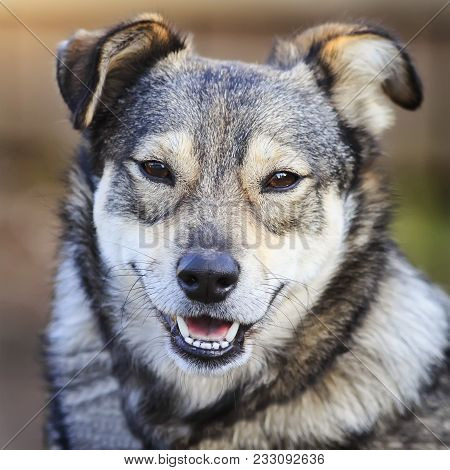 Portrait Of Cute Funny Dog Mongrels Smiling Opening Mouth Friendly On A Sunny Day